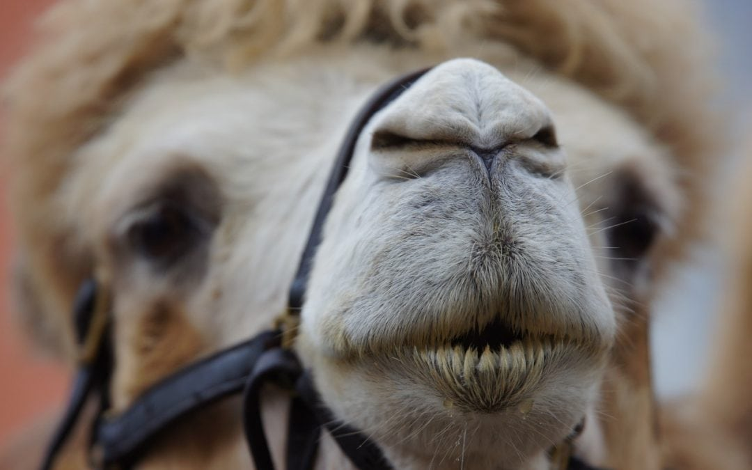 Straws on the camel's back